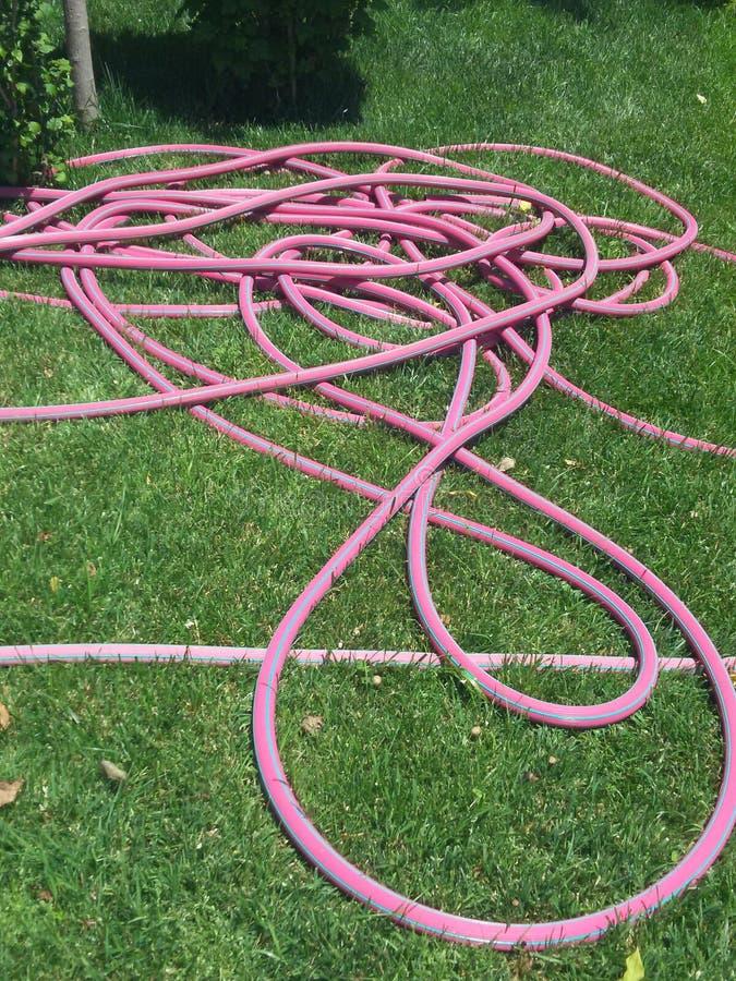 Tubo flessibile rosa fotografia stock