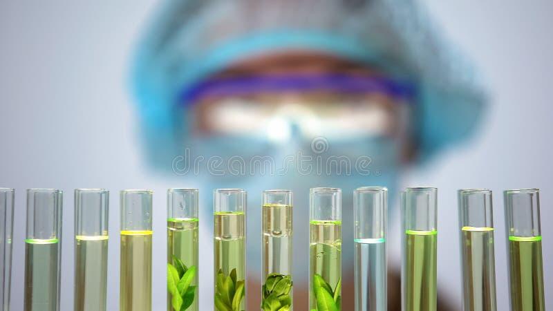 Tubos de ensaio com o pesquisador das plantas verdes atrás, sabão orgânico, indústria da beleza fotografia de stock royalty free