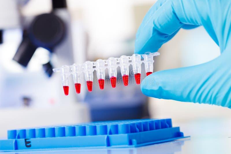 Tubos de ensaio da tira do PCR imagens de stock