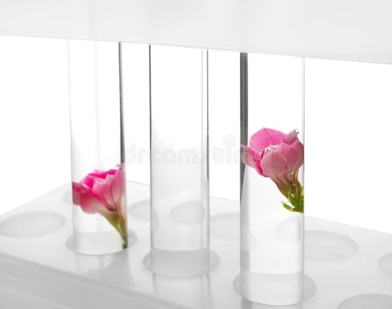 Tubos de ensayo con las flores en estante en el fondo blanco, primer foto de archivo