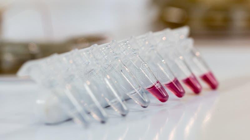 Tubos plásticos de Microcentrifuge en la tabla foto de archivo