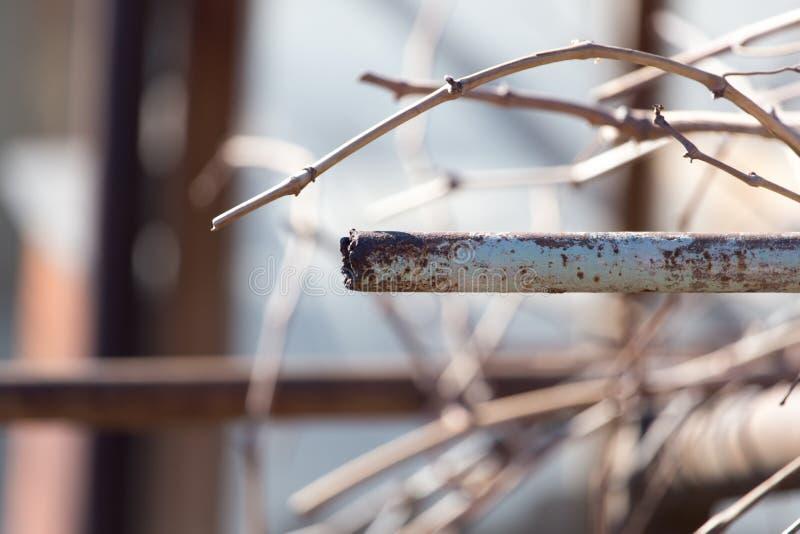 Tubulação oxidada na natureza foto de stock