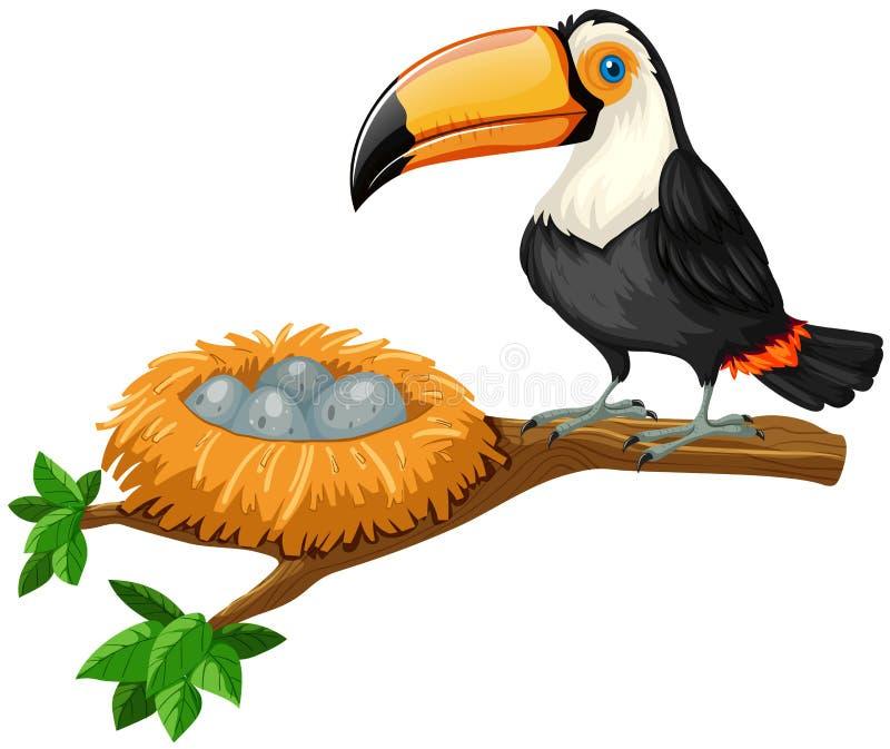 Tucán y huevos en jerarquía ilustración del vector