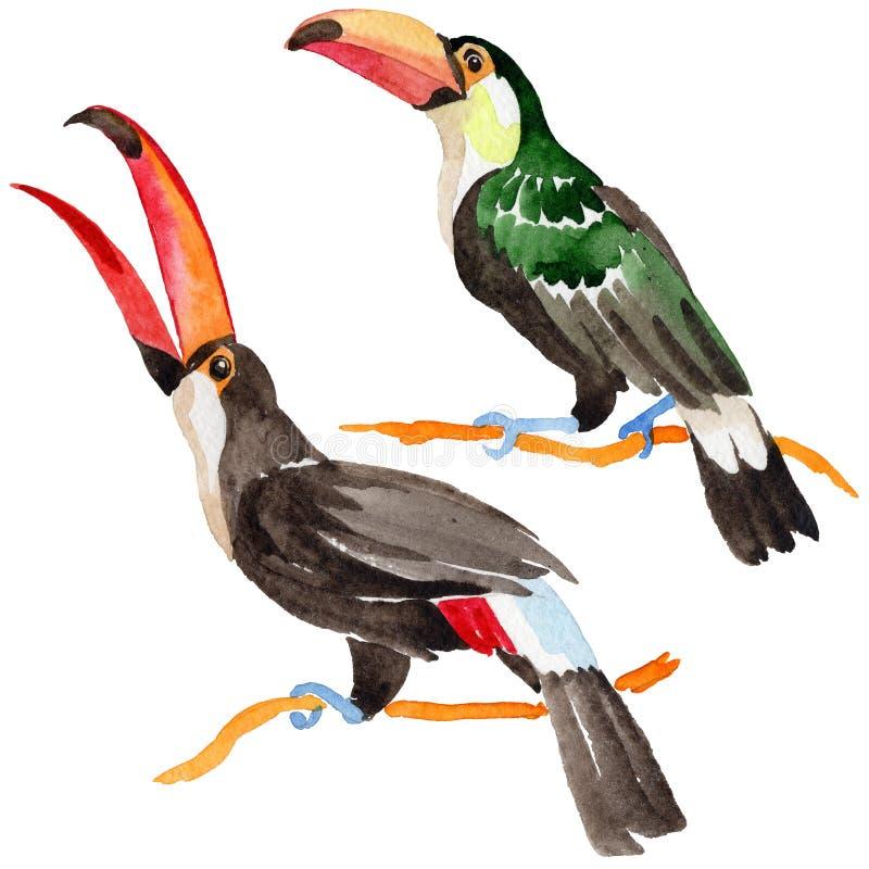 Tucano dell'uccello del cielo in una fauna selvatica da stile dell'acquerello isolata illustrazione di stock