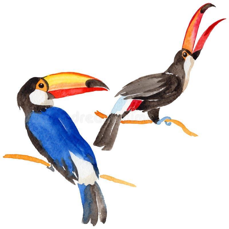 Tucano dell'uccello del cielo in una fauna selvatica da stile dell'acquerello isolata royalty illustrazione gratis