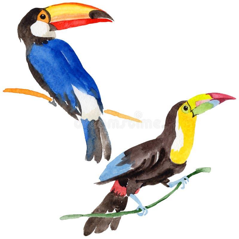Tucano dell'uccello del cielo in una fauna selvatica da stile dell'acquerello isolata illustrazione vettoriale