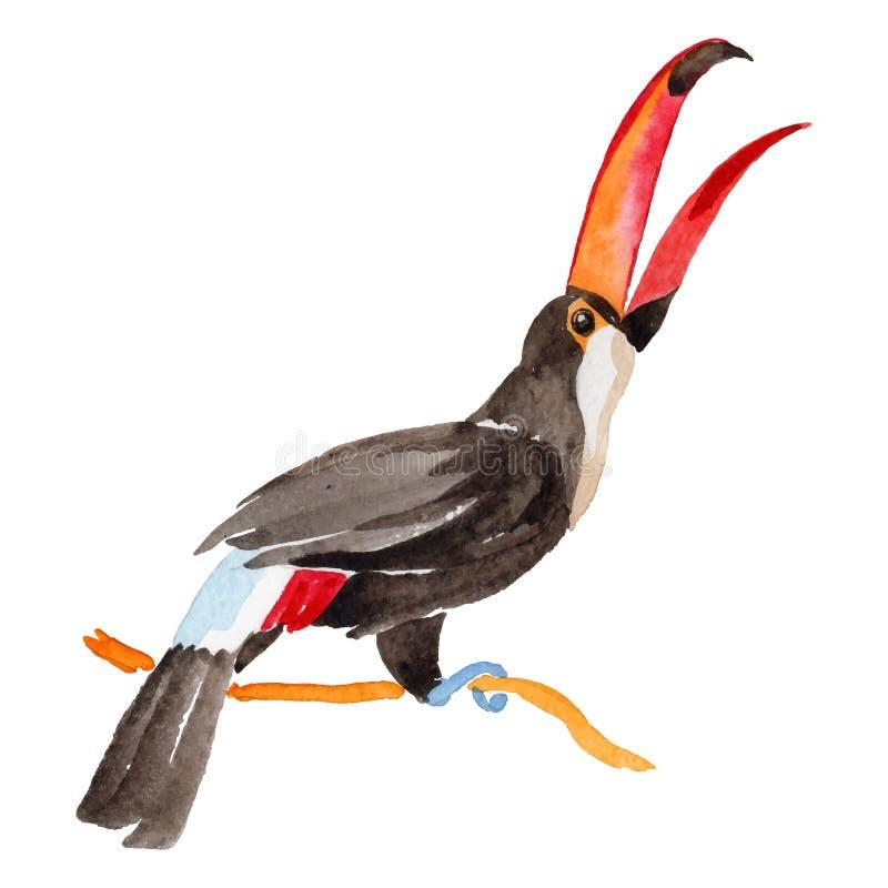 Tucano dell'uccello del cielo in una fauna selvatica da stile di vettore isolata illustrazione vettoriale