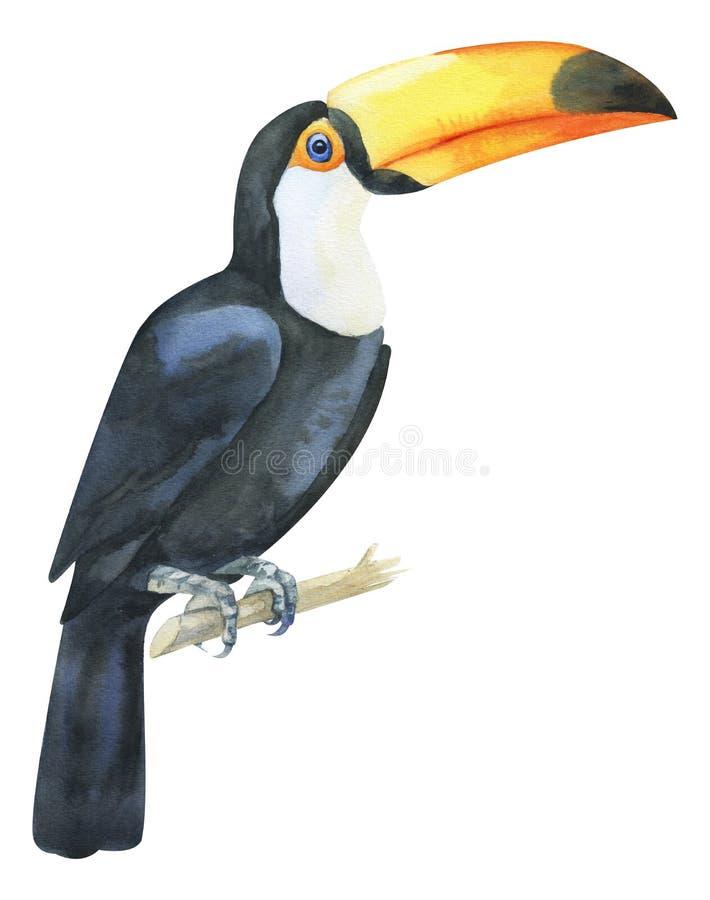 Tucano pintado à mão da aquarela Pássaro exótico preto e branco com beack grande amarelo no ramo Pássaro tropical isolado no bran ilustração do vetor