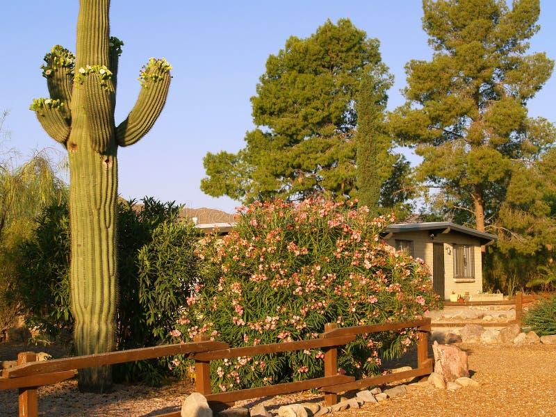 Tucson residence. Typical Tucson neighborhood scene, with saguaro royalty free stock photography
