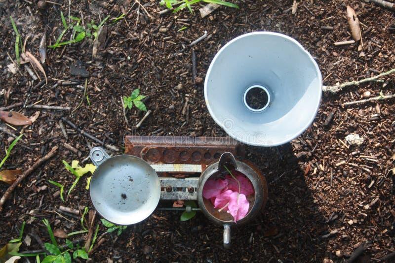 Tudo considerado ? peso de Bougainvillea como um copo esterlador e refletor de alumínio foto de stock royalty free