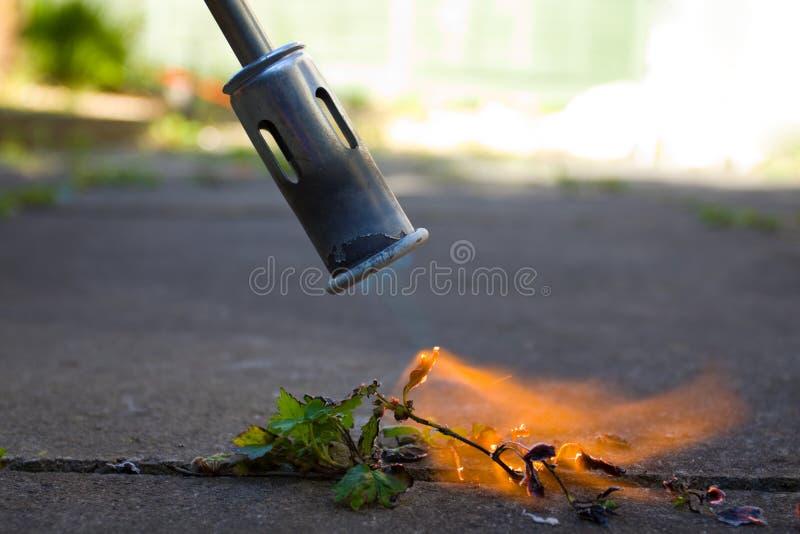 Tueur de Weed image libre de droits