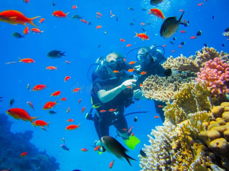 Tuffandosi alle barriere coralline nell'Egitto fotografia stock libera da diritti