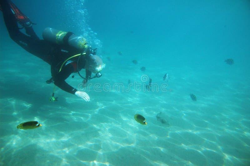 Tuffandosi nel Mar Rosso immagini stock