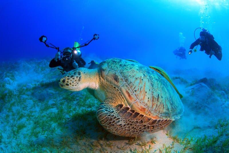 Tuffandosi nel Mar Rosso fotografia stock