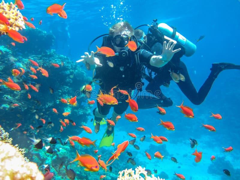 Tuffandosi nel Mar Rosso Attrazione turistica fotografia stock libera da diritti