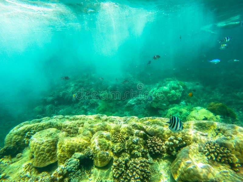 Tuffarsi Zanzibar fotografia stock