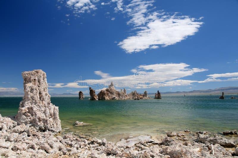 Tufos no mono lago. imagens de stock royalty free