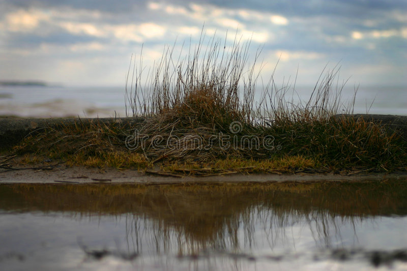 Download Tuft stock photo. Image of sand, beach, near, water, herb - 1324