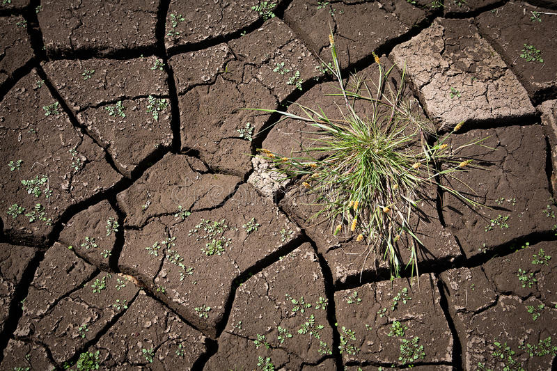 Tuft of grass on a background of cracked ground. Abstract background of cracked ground royalty free stock images