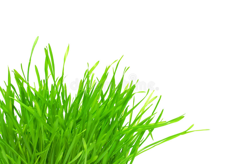 Download Tuft Of Green Grass Royalty Free Stock Image - Image: 8874516