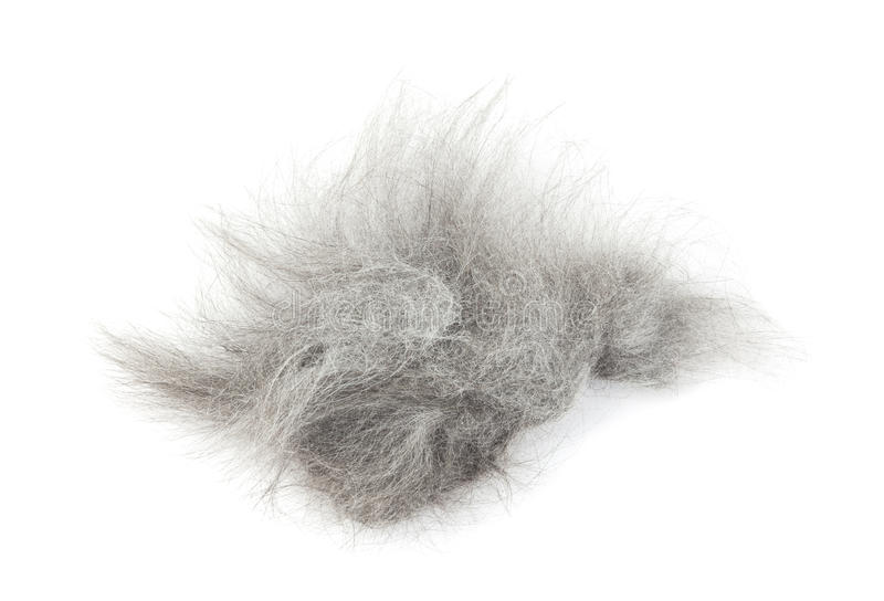 Tuft of hair after shaving cat