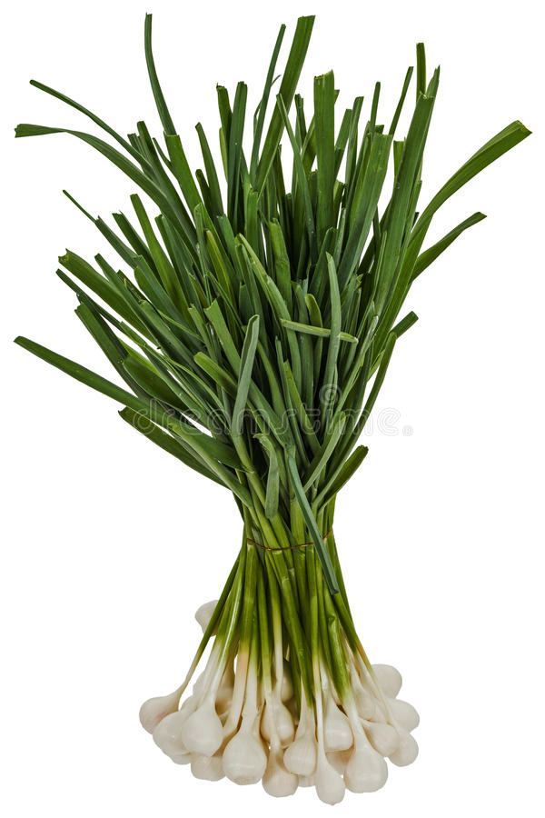 Tuft of raw garlic for cooking, isolated on white background.  royalty free stock photography