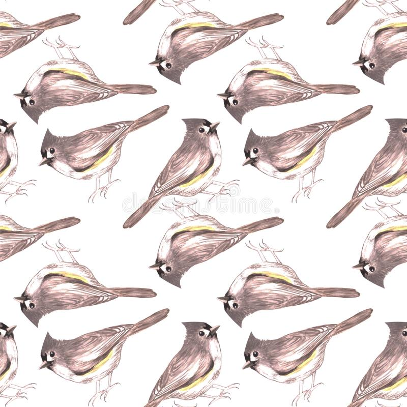 Tufted titmouse or Baeolophus bicolor bird seamless watercolor birds painting background.  royalty free illustration