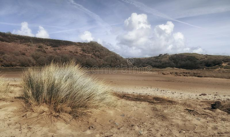 Tufts of Marram Grass royalty free stock photo