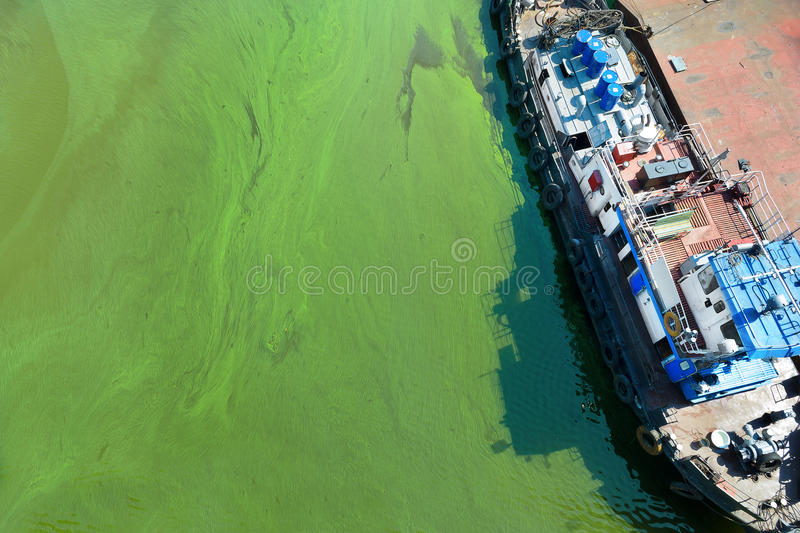 Tugboat in water with green algae. Top view on tugboat near pier in dirty water with a green algae royalty free stock image