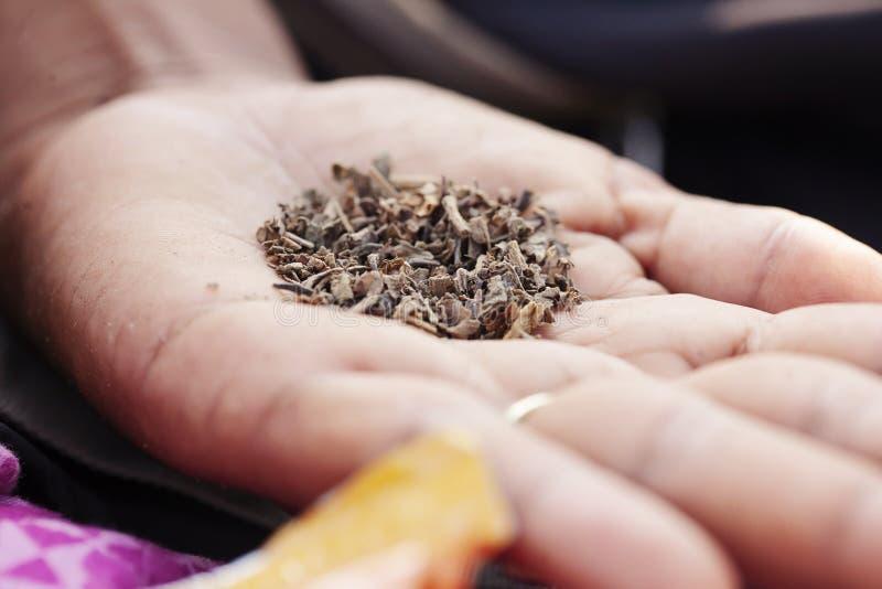 Tugga tobak i kvinnlig g?mma i handflatan arkivfoton