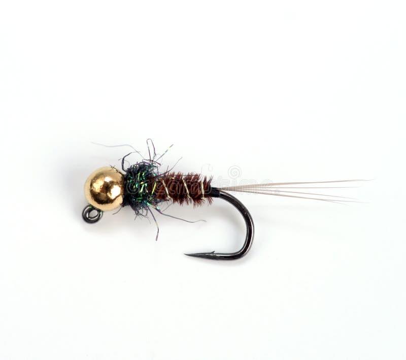 tuggafisk arkivfoton