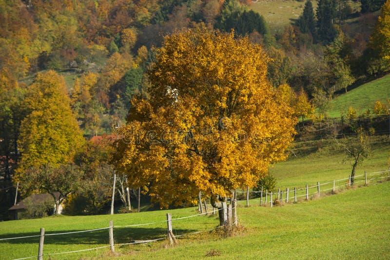 Tuhinj, Kamnik, Slovenia. Autumn in Tuhinj, Kamnik, Slovenia stock photos