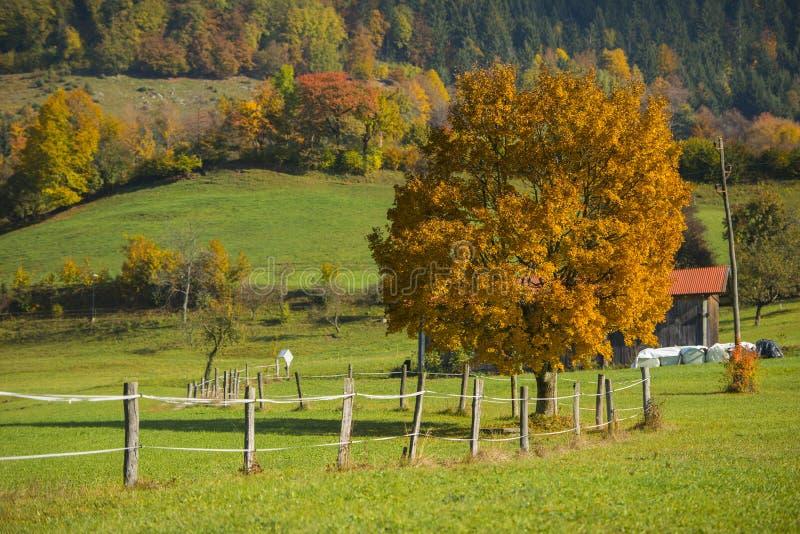 Tuhinj, Kamnik, Slovenia. Autumn in Tuhinj, Kamnik, Slovenia royalty free stock photo