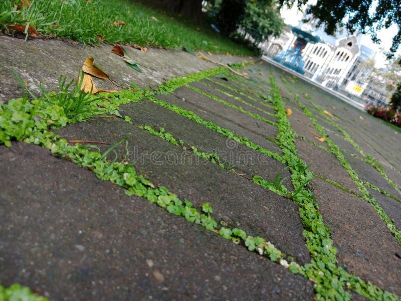 Tuiles d'herbe photos stock
