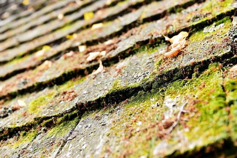 Tuiles de toit en bois superficielles par les agents photographie stock