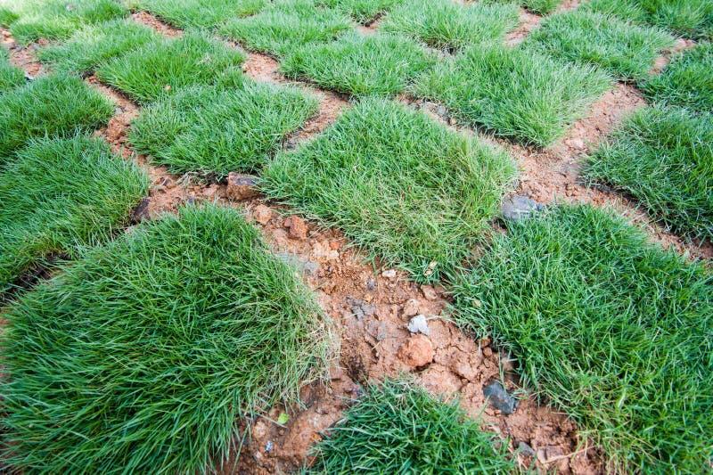Tuiles fraîches d'herbe verte image stock