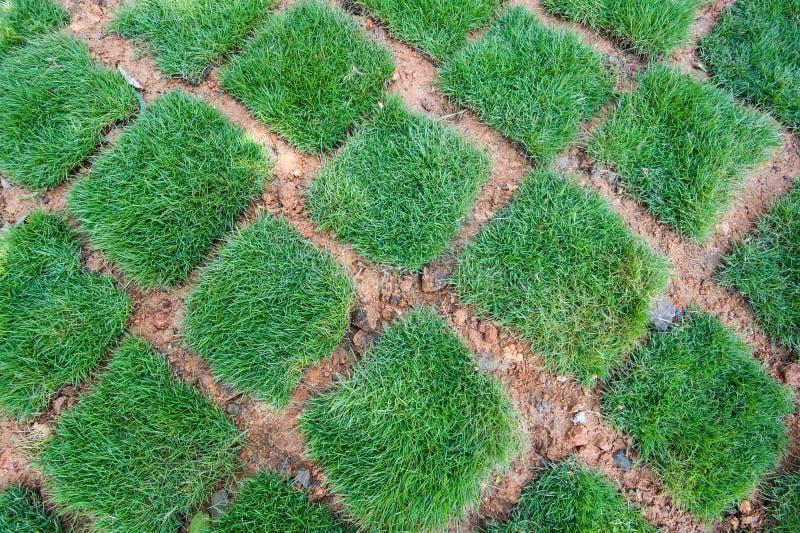 Tuiles fraîches d'herbe verte photographie stock libre de droits