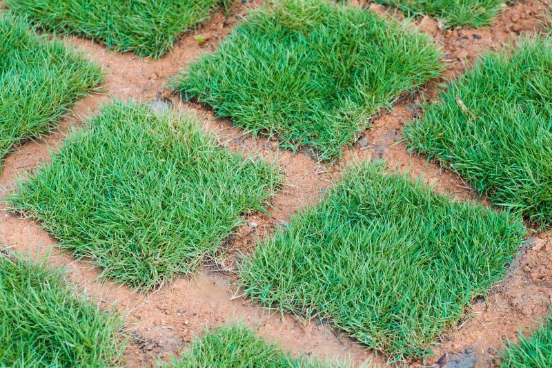 Tuiles fraîches d'herbe verte images libres de droits