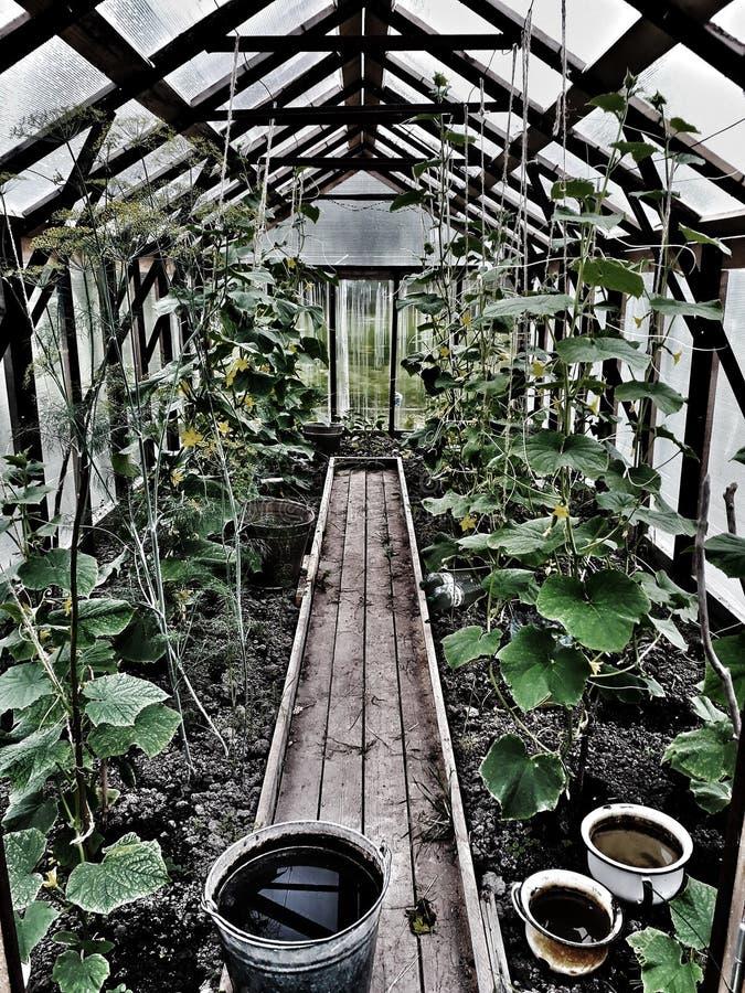 Tuin 1 stock afbeelding