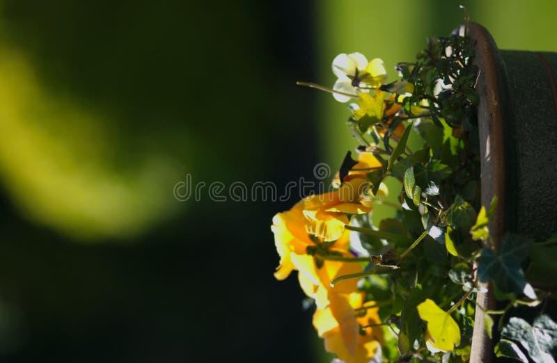 Tuin stock fotografie