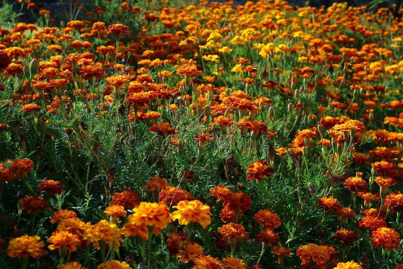 Download Tuin stock afbeelding. Afbeelding bestaande uit botanisch - 280873