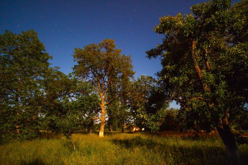 Tuin bij nacht royalty-vrije stock foto's