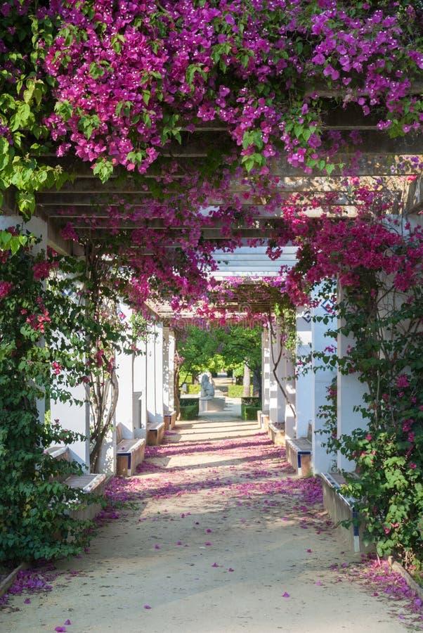 Tuin in bloei Sevilla Spanje royalty-vrije stock foto