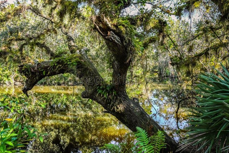 Tuin in de Takken van een het Leven Eik stock foto's