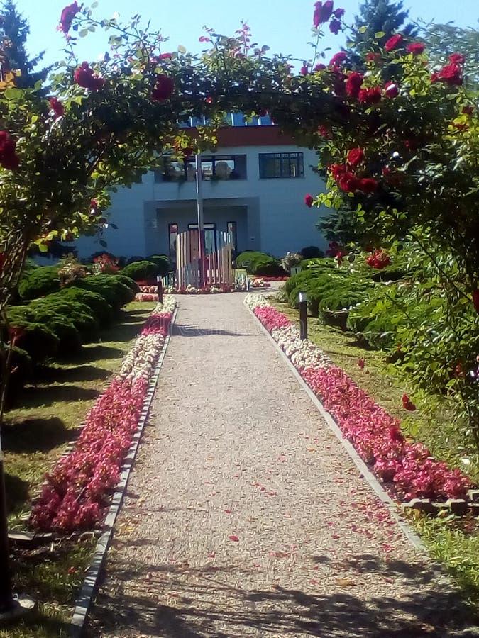 Tuin in de zomer stock fotografie