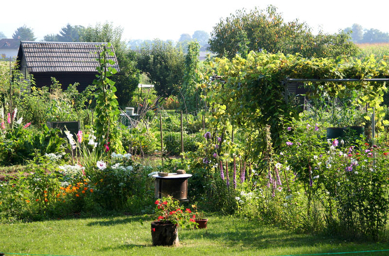 Tuin in de zomertijd stock foto