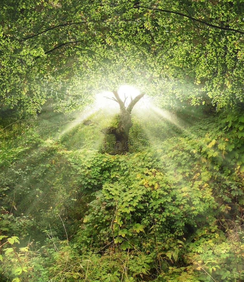 Tuin Eden stock illustratie