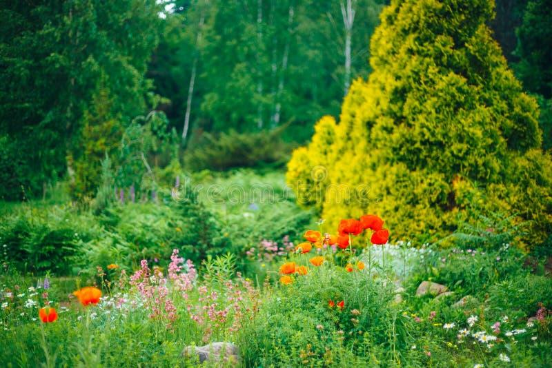 Tuin het Modelleren Ontwerp Bloembed, Groene Bomen stock afbeeldingen