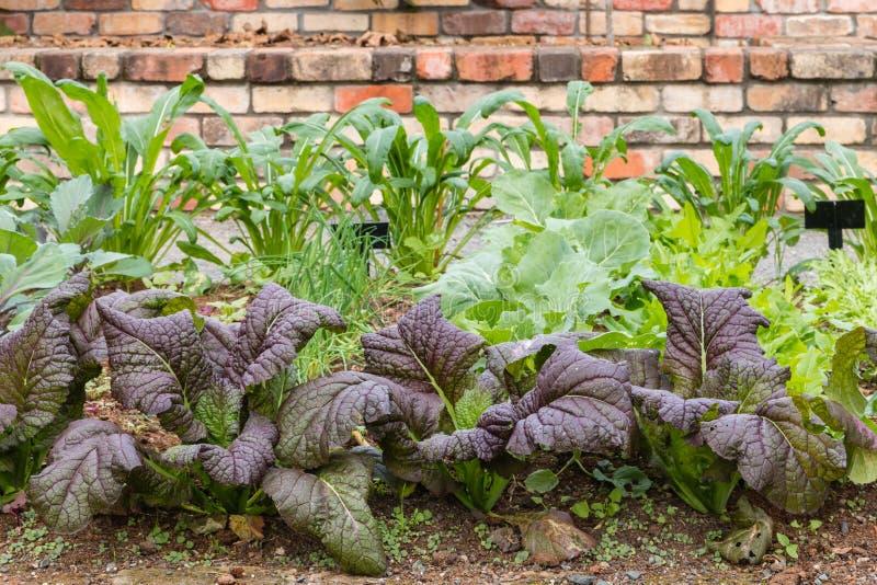 Tuin met bladgroenten royalty-vrije stock afbeelding