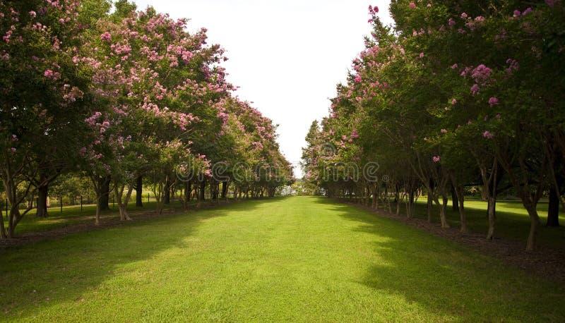 Tuin met bomen aan kanten stock foto